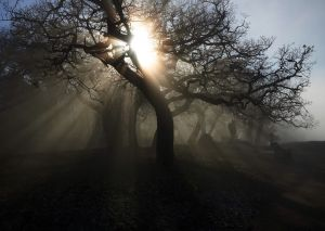 Sun and Fog Caught in a Tree.jpg